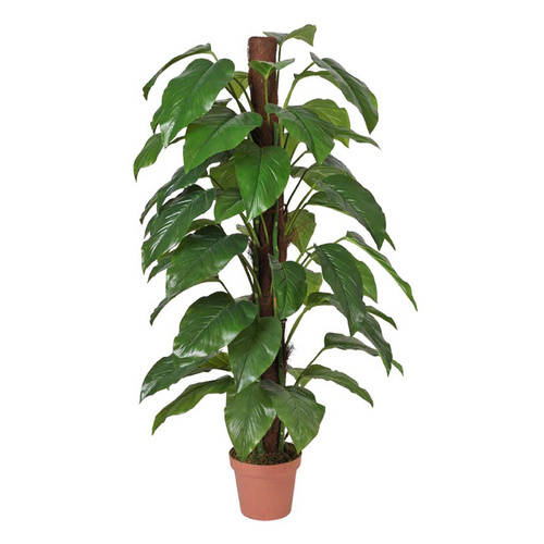 Artificial Money Plant (Aureus) - 155cm